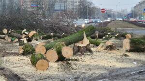 Czy to powstrzyma wycinkę drzew? Zaczyna się okres lęgowy ptaków