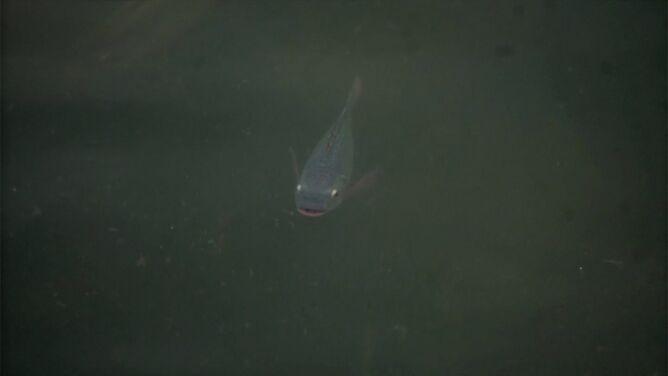 Usunęli z rzeki dziesiątki tysięcy ton śmieci, wróciły ryby i ptaki