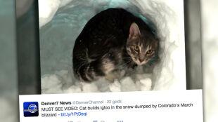 Kot zrobił igloo w śniegu