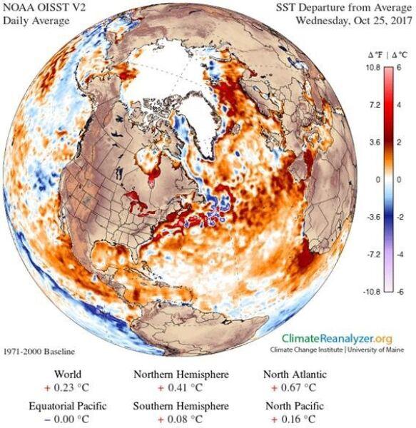 Odchylenie temperatury wód powierzchniowych Atlantyku od normy wieloletniej (University of Maine)