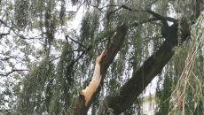 Powalone drzewa w Kołobrzegu (MIASTOKOLOBRZEG.PL)